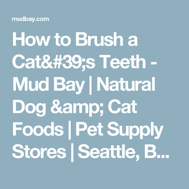 How to Brush a Cat's Teeth - Mud Bay | Natural Dog & Cat Foods | Pet Supply Stores | Seattle, Bellevue, Tacoma, Portland - for Healthy Dogs and Cats - Mud Bay for Healthy Dogs and Cats