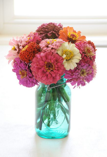 love zinnias! singles, doubles, various sizes (yellow gerbers!) mix and match white & yellows