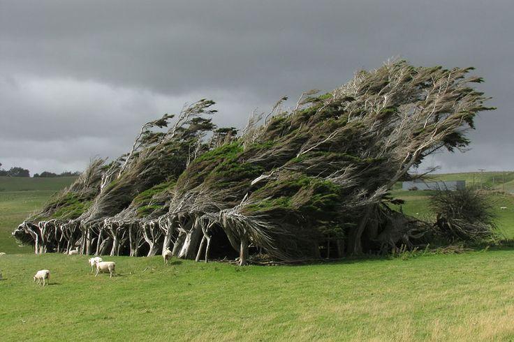 Le Slope Point est le point le plus au sud de l'île néo-zélandaise, à mi-chemin entre le pôle sud et l'équateur. Les vents venus de l'Antarctique y sont si violents qu'ils forcent les arbres à se rabattre sur eux-mêmes, créant ainsi d'étranges et fascinantes formes qui semblent tout droit sorties d'un film de Tim Burton.