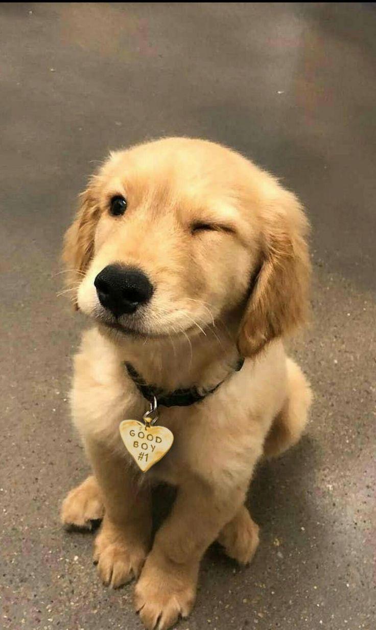 Hunde Welpen Haustiere Schone Hunde Babyhunde