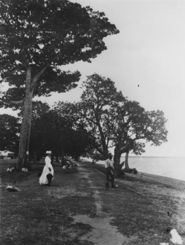 The Esplanade, Cairns c1888 - John Oxley Library, State Library of Queensland, Neg 70809