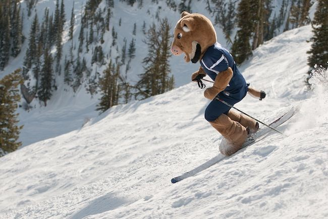 How many universities can say they have a skiing mascot? Montana State University does!