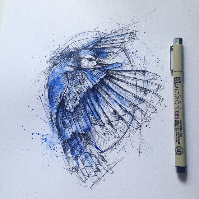 #3 Blue Jay Among the comments in the drawing of the squirrel I have chosen the Blue Jay (Cyanocitta cristata). Is a passerine bird in the family Corvidae, native to North America. It is resident through most of eastern and central United...