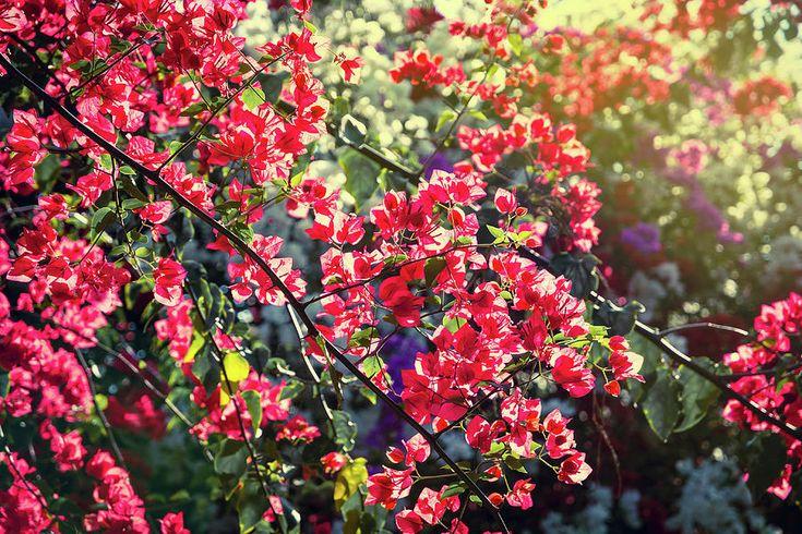 Pink Flowers With Beautiful Sunlight Photograph by Nadezhda Tikhaia #NadezhdaTikhaiaFineArtPhotography #ArtForHome #HomeDecor #Pink #Flowers #InteriorDesign #FineArtPrints