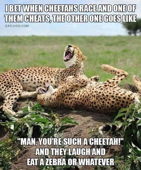15 Down Right Funny Cheetah Memes Funny Funny Animals Funny