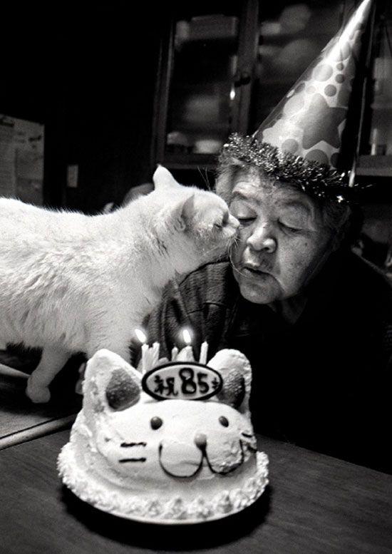 Mrs. Missao and Fukumaru © Miyoko Ihara // so cute: Cats, Miyoko Ihara, Happy Birthday, Animals, Birthdays, Crazy Cat, Photo, Cat Lady