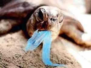 La plastica e l'inquinamento. Una vita sempre più di plastica. La plastica è il materiale più utilizzato nella produzione industriale. E' pratica, leggera e poco costosa. Ma quello che non forse non sapete è che moltissime percentuali finiscono nel mare. #usodellaplastica #stopallaplastica