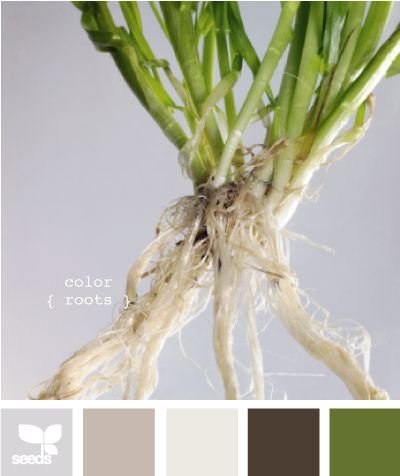 color roots ~ living room / kitchen