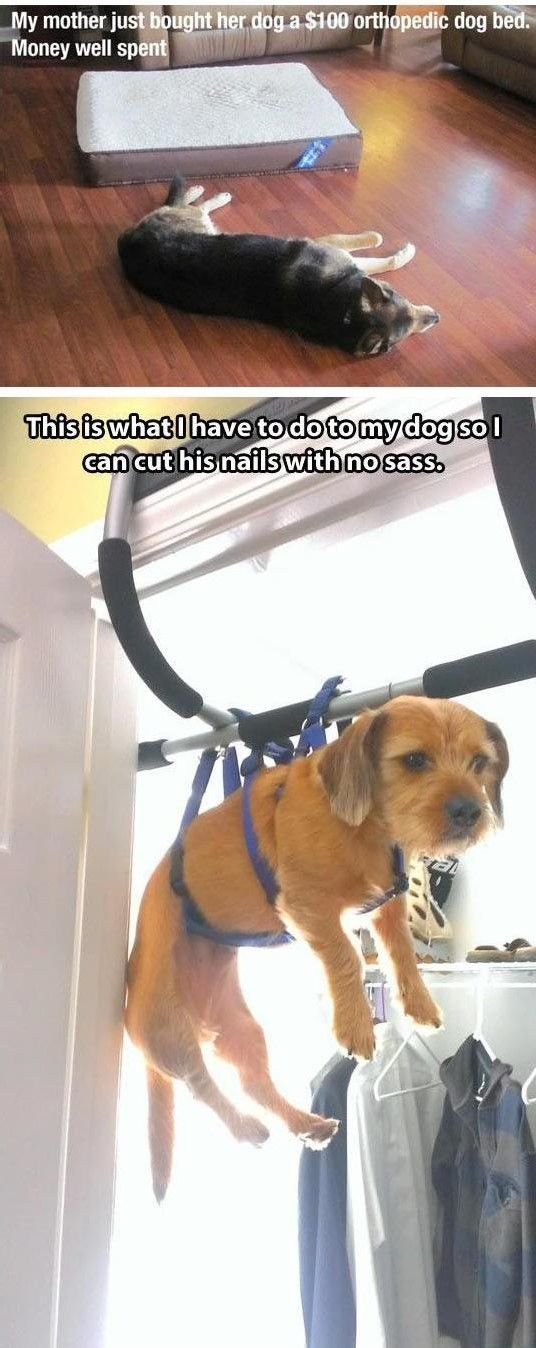 Best Funny Dog Pics Ideas On Pinterest Funny Dog Pictures - 21 hilarious dog moments