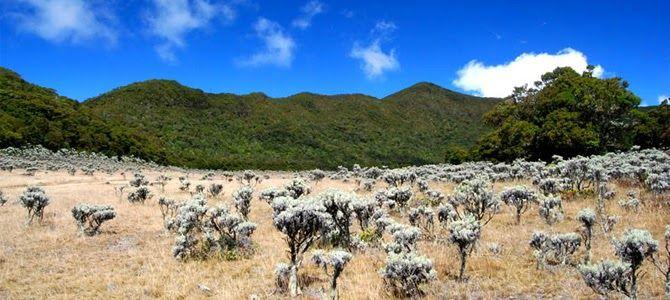 Menakjubkan 30 Gambar Bunga Edelweis Tercantik 5 Lokasi Di Indonesia Dengan Padang Edelweis Terindah 4 Tempat Terbaik Untuk Melihat Di 2020 Gambar Bunga Pemandangan