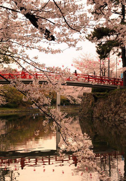 Visitare il #Giappone, Paese in cui la più estrema modernità convive con la più antica tradizione, è un'esperienza da fare almeno una volta nella vita. www.it.lastminute.com #localista #pinspiration