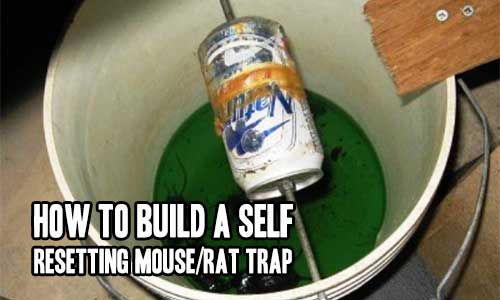 how to build a self resetting mouse rat trap household tips pinterest rat traps mice and. Black Bedroom Furniture Sets. Home Design Ideas