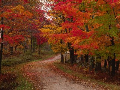 I love the colors. The quiet road also appeals to walking in nature.  Country Road in the Fall, Vermont, USA