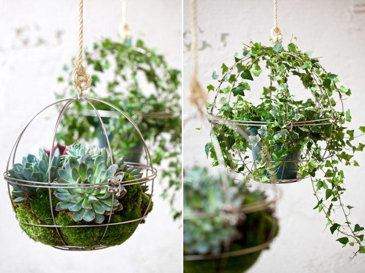 Efter amplarna –nu kommer växtkloten