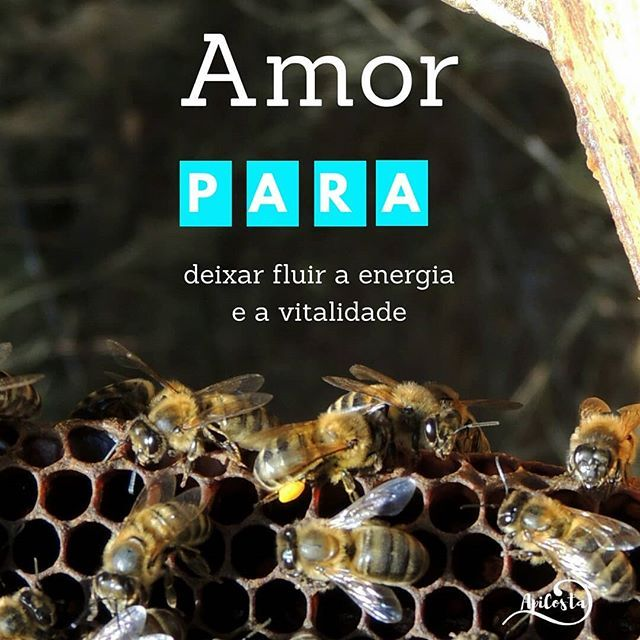 A familia apicosta deseja-lhe ...🐝🐝🐝 apicosta.com #apiculturanatural #abelhas #bees #beekeeping #naturalbeekeeping #mel  #Regram via @apicosta