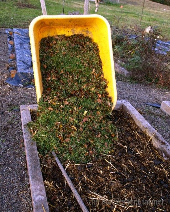 Best 25 Garden Soil Ideas On Pinterest Organic Gardening Tips Gardening And Planting