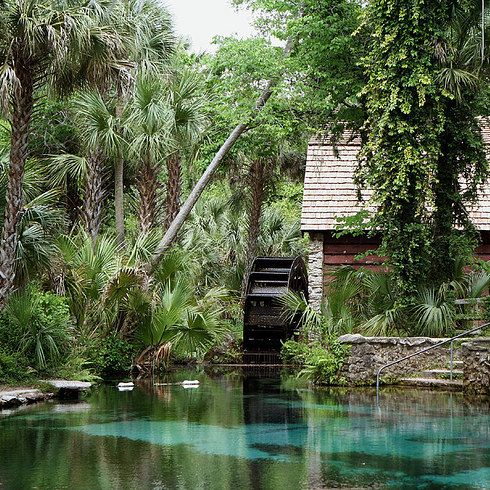 From Orlando to Ocala National Forest in Ocala, FL | 11 Awesome Summer Day Trips From Major U.S. Cities