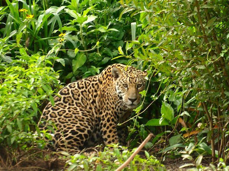 Pantanal Galeria de fotos - Pousada Santa Clara Ltda.