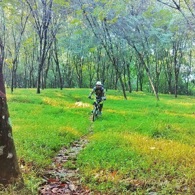 selamat siang #pacificbikerider :) hutan seperti ini biasanya sering digunalan untu ber-crosscountry. ya jalan setapak seperti ini lah yang mereka cari :D dan ngomong-ngomong tumben bener om @phodhipo gak ke pantai? hehe  #pacificbikes #crosscountry #offroad #mountainbike #mtbindonesia #sepeda #sepedagunung #bersepeda #hutan #hijau #selamatsiang #rehat