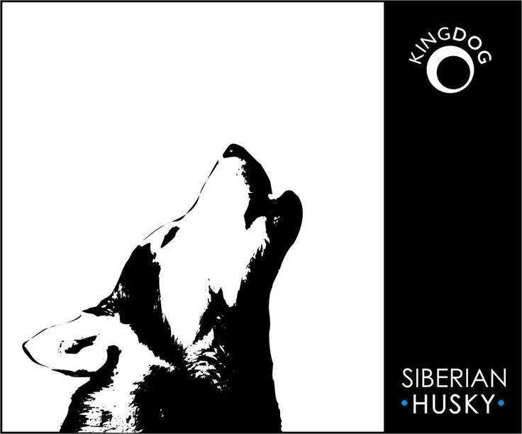 siberian husky like a wolf