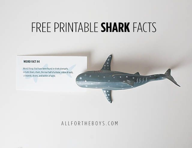 All for the Boys - Free printable shark facts. Great for lunchbox notes and shark week!