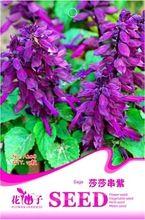 Rare Salvia Splendens ' faro ' púrpura Salvia semillas de flores anuales, paquete original, 15 semillas / paquete, Sage escarlata(China (Mainland))