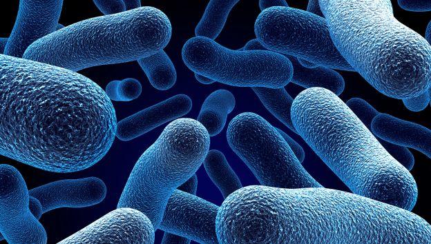 Bactérias podem formar 'microparques' eólicos