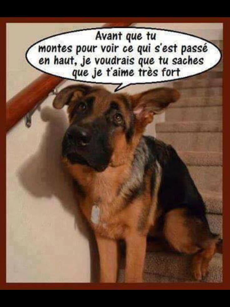 Épinglé par JA JEROME sur Blagues chiens, chats | Image drôle chien, Humour bébé et Humour chiens