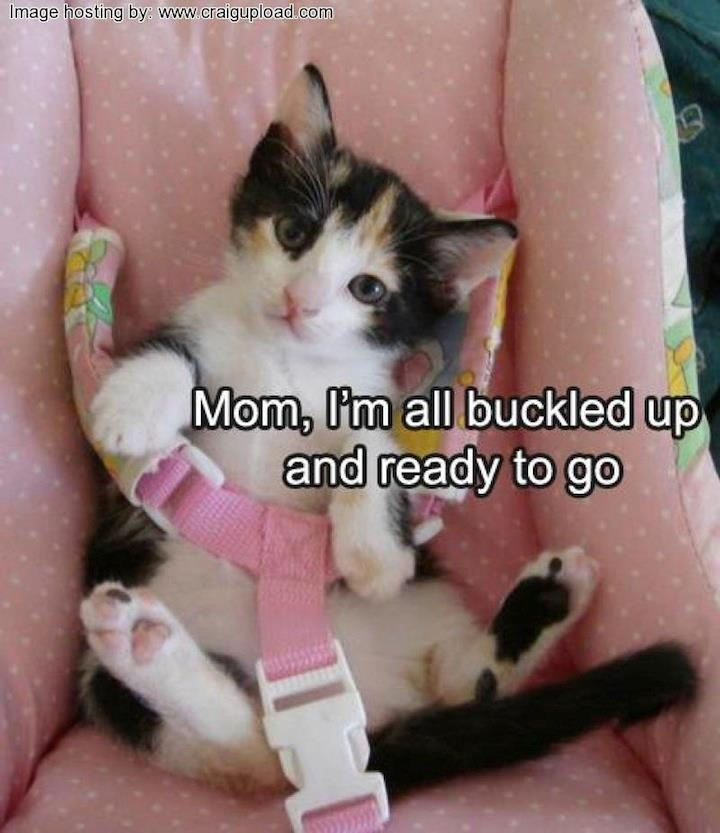 sweetie pieAdorable Kitty, Cars Humor, Pink Cars, Cat Humor, Cat Meow, Baby Animal, Kittens, Cars Seats, Adorable Animal