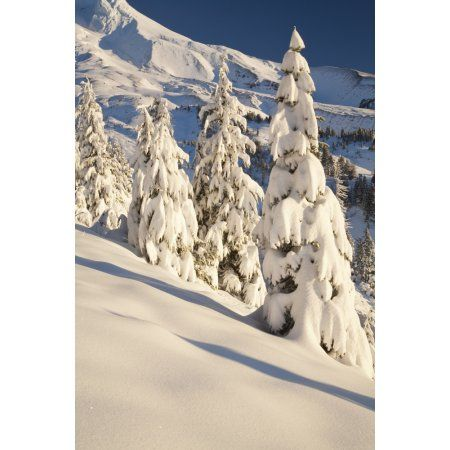 Oregon United States Of America Snow Covering A Mountain And Trees In Winter On Mount Hood In The Oregon Cascades Canvas Art - Craig Tuttle Design Pics (12 x 19)