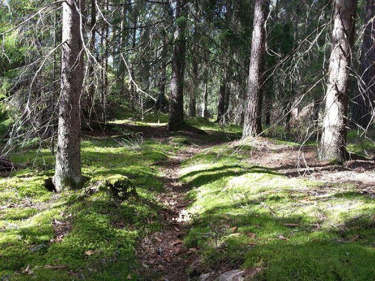 What a feeling in Finnish wood! Photo by Pirjo Salo.