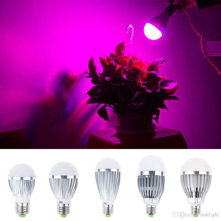 Led Plant Grow Lamp 12W Blue/Red 12 Leds Red Blue E27 LED Plant Grow Lights Lamp 110V 220V for Indoor Plants Online with $12.36/Piece on Mdllight's Store | DHgate.com