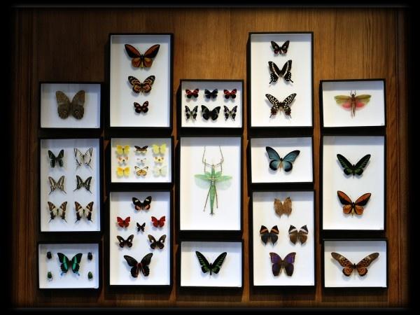 Insectes Deyrolle C Marc Dantan