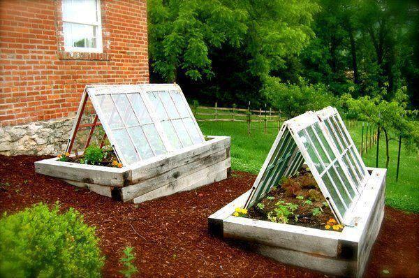 vieilles fenêtres recyclées en serres