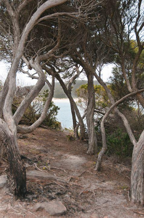 Barry Park, Fingal Bay, Port Stephens #fingalbay #portstephens