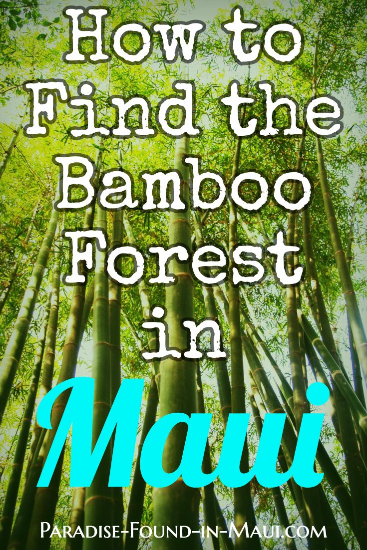 Complete directions for finding the best and biggest bamboo forest in Maui!