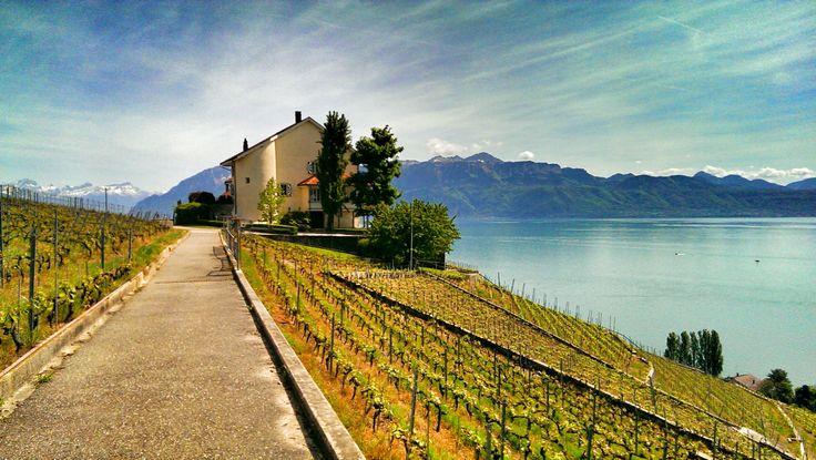 Lavaux, Switzerland, Vaud
