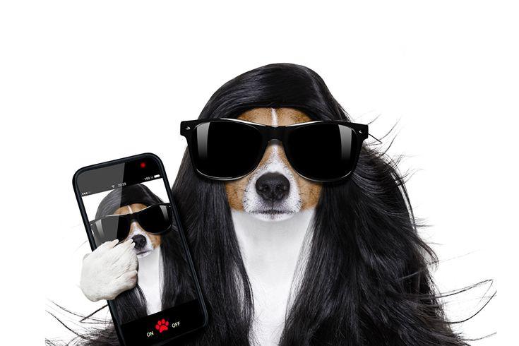 Bilder Jack Russell Terrier Hunde Smartphone Lustige Haar Brille Tiere Weißer hintergrund