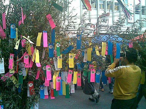 tanabata oriental