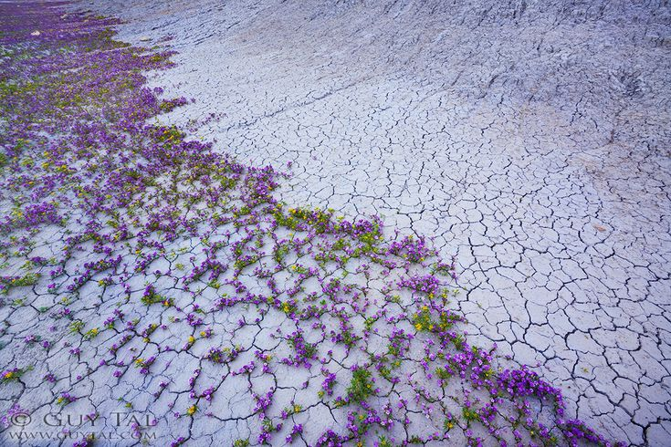 Colourful Flowers in Utah Deserts Captured by Guy Tal