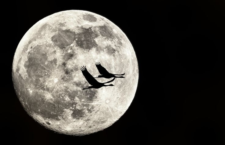 Photograph Flying to the moon by Elad Saporta on 500px