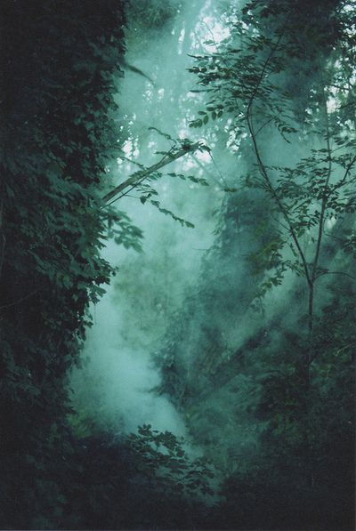 Reminds me of the dark forest in HP