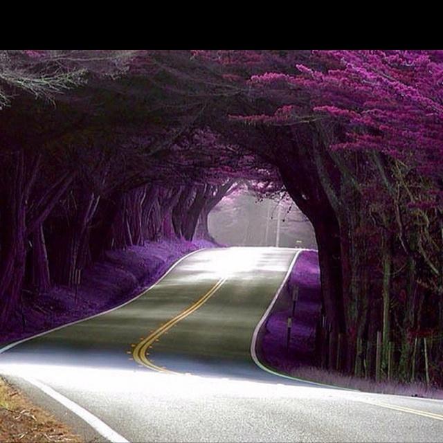 Purple RoadPurple Trees, The Roads, Paths, Trees Tunnel, California, Beautiful, Roads Trips, Places, Tree Tunnel