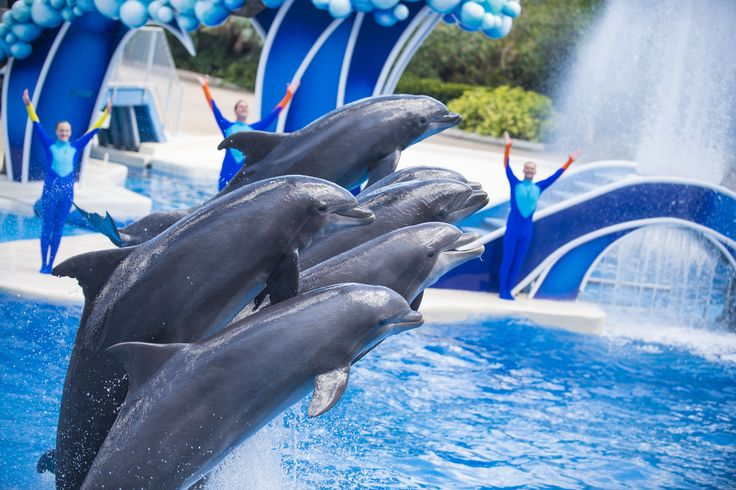 Dolphin Days is a festive celebration of our natural world starring the ocean's most playful ambassador, the Atlantic Bottlenose Dolphin.