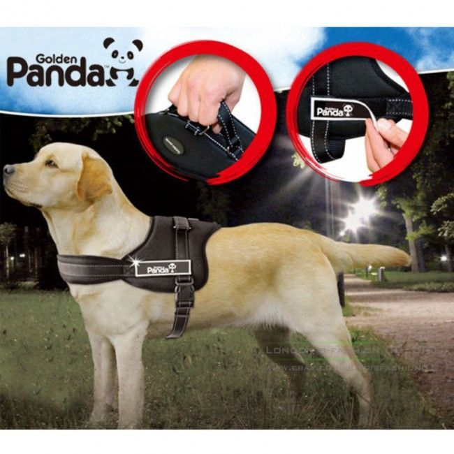 While A Dog Collar Is A Good Way To Train Your Dog To Walk On A