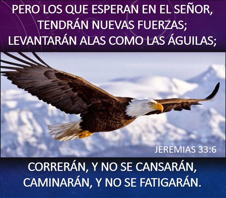 los que esperan en el señor tendrán nuevas fuerzas, levantarán alas como águilas,correrán y no se cansarán, caminarán y no se fatigarán, cristiano, cristo, jesús, cita bíblica, frases, poesías,