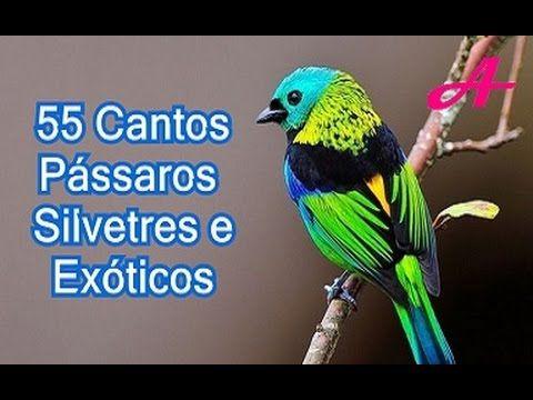 Canto de Pássaros Silvestres e Exóticos 55 Cantos 🐤https://youtu.be/3MsAH77pM0I