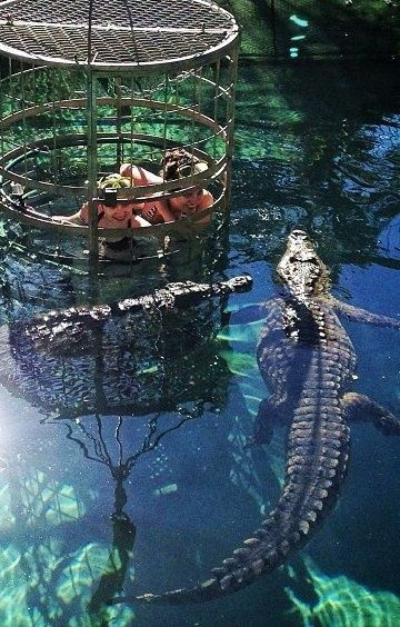 Off the beaten path you can do cage diving with crocodiles...Australia is a prime location for this along with South Africa. Coming face to face with the jaws of these terrifying and immensely powerful prehistoric creatures is certain to give you the heebie-jebbies...10 Unusual Ideas to Add to your Bucket List
