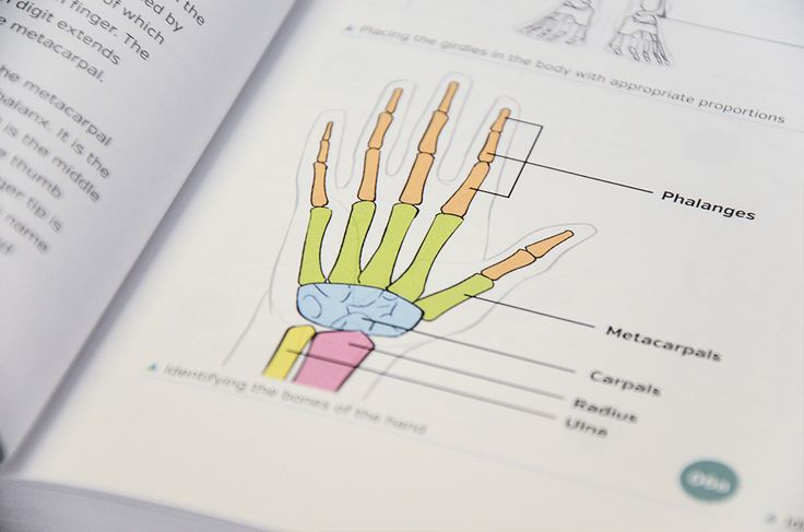 Learn the bone structure of the hand in the helpful Anatomy for 3D Artists book