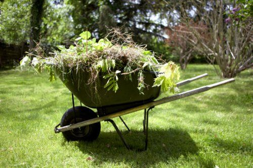 Tips How To Beat The Weeds In Your Garden!